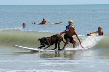 fun surfing